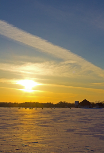 D-33-194 - White-tail Deer in a Snow-covered Field at Sunset. Port Hope, MI.