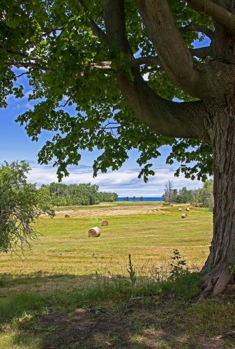 D-28-60 - Tranquil Rural Scene. Huron City, MI.