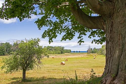 28-61 - Tranquil Rural Scene. Huron City, MI.