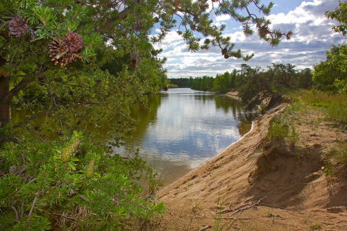 D-14-31 - Scene along the shore of the Pinnebog River. Port Crescent State Park Day Use Area. Port Austin, MI.