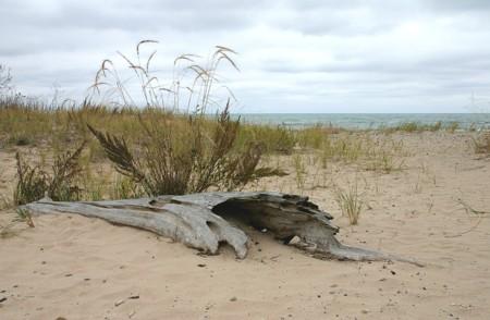 D-19-34 - A scene along the shore of Lake Huron,